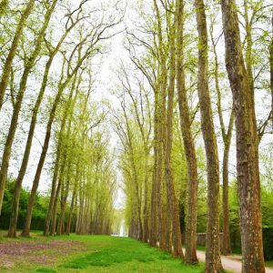 Picture of trees along a walking path during the springtime