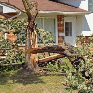 Picture of a damaged tree next to a home that split from lightning.
